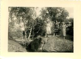 PHOTO ORIGINALE  FORET DE FONTAINEBLEAU 1952  FORMAT  10.50 X 8 CM - Lieux