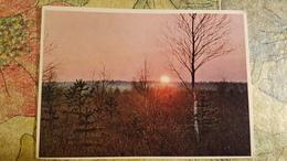 Belarus. BELOVEZHSKAYA PUSHA. Sundown. Old USSR Postcard. 1950s  - Special Stationery Emblem - Belarus