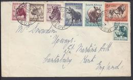 GB - Afrique Du Sud - Affranchissement Faune Sud Africaine, Sur Enveloppe De Mossel Bay Pour Canterbury (England) B/TB - - Afrique Du Sud (...-1961)