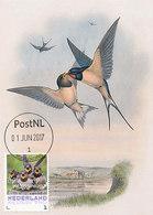 D33292 CARTE MAXIMUM CARD 2017 NETHERLANDS - HIRUNDO RUSTICA BARN SWALLOW CP ORIGINAL - Swallows