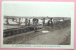 CPSM Sénégal La Récolte Du Sel Aux Salines De Salsal - Senegal