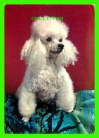 CHIENS - DOGS - CANICHE - POODLE - JOHN HINDE ORIGINAL - No 2CX 121 - - Chiens