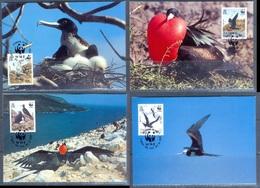 G366- Ascension Island Maxi Cards 1990 Adlerfregattvogel Frigate Birds. WWF. W.W.F. - Maximum Cards