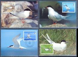 G367- Benin 1989 Maxi Cards Roseate Tern Birds. WWF. W.W.F. - Maximum Cards