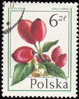 POLAND - Scott #2205 Rosa Canina (*) / Used Stamp - Fruit