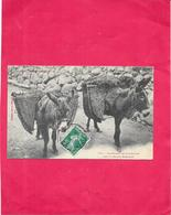 DEPT 65 - Les Moyens De Locomotion Dans La Haute Montagne - DRO/SAL - - Cauterets