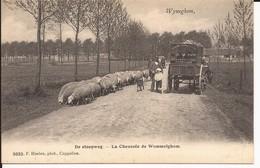 Wijnegem De Steenweg La Chaussée De Wommelghem (Hoelen 3033) - Wijnegem