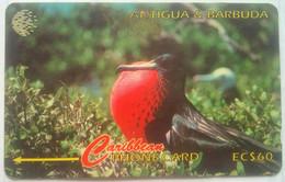 15CATA Frigate Bird EC$60 - Antigua And Barbuda