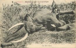 AFRIQUE - UNE CHASSE à L- ELEPHANT.- GROS PLAN. - Postcards