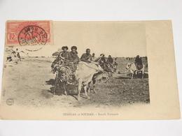 C.P.A. - Afrique - Sénégal Et Soudan - Boeufs Porteurs - 1908 - SUP (W5) - Senegal