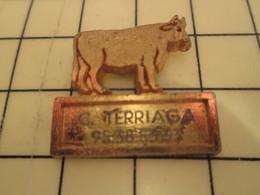 Pin812e Pin's Pins / Rare Et De Belle Qualité / CORSE BOUCHERIE TERRIAGA Ah Les Fameuses Vaches Corses Subventionnées Pa - Animals