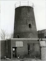BAARLE-HERTOG (Antw.) - Molen/moulin - Historische Opname Van De Stenen Molenromp ('Molen Loots') In 1982 - Baarle-Hertog