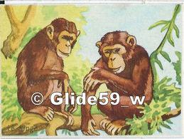Image - Les Singes - 2 - Animals