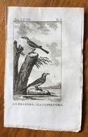 UCCELLI ANTICA STAMPA LA BALLERINA E LA CUTRETTOLA  Silvestri Inc. 1750 C.  10x15 C. - Stampe & Incisioni