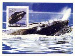 Guinea 2002, Animals, Whales, BF - Guinea (1958-...)