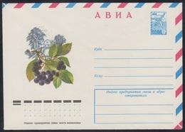 12861 RUSSIA 1978 ENTIER COVER Mint PLANT Plants BERRY BAIE BEERE CHOKEBERRY ARONIA Bush BUISSON GEBÜSCH Food NATURE 300 - Planten