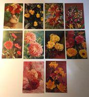 Fiore Flower - Auguri - Lotto 10 Cartoline - 5 - 99 Cartoline