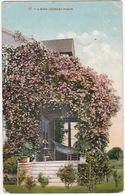 57 - A Rose Covered Porch. ( Tacoma To Maastricht, Holland  - (WA., USA)  - 1910 - Tacoma