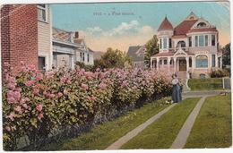 1910 - A Rose Hedge. ( Tacoma To Maastricht, Holland  - (WA., USA)  - 1910 - Tacoma