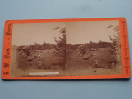 BASE BALL GROUND ( N° 428 ) Scenes In Central Park NEW YORK : Stereo Photo G. W. PACH ( Voir Photo Pour Detail ) ! - Photos Stéréoscopiques