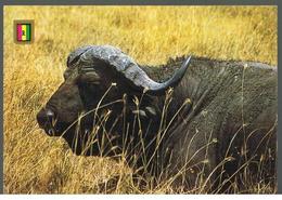 CP Afrique Rwanda Parc National Akagera - Buffle - Rwanda