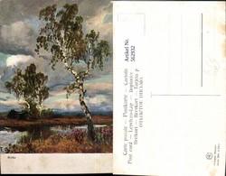 562932,Künstler Ak Birken Birke Wald Bäume Baum - Botanik