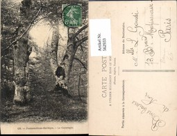 562933,Fontainebleau-Barbizon Le Caravagio Bäume Baum - Botanik