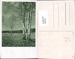 562939,Birke Birken Bäume Baum - Botanik