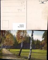 562943,Birke Birken Allee Bäume Baum Pub Photochromie Nenke & Ostermaier 334/4940 - Botanik