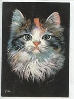 Chat : Chiens Et Chats Nos Amis Par Schrub Illustrateur Peintre (n°24/006/06 Cp Vierge) - Katzen