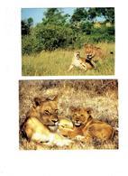 Lot 4 Cpm - Lion Lionne Lions Lionceau - GORONGOSA Mozambique Faune Africaine 5036 - Lions