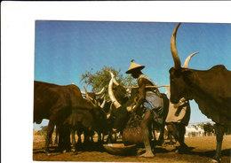 BERGER PEUL NIGER Superbe Cpsm 15X105 Animée Bon état Voir Scans - Niger
