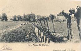 Ellecom, In De Weide Bij Ellecom - Paesi Bassi