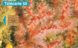 CARTE-PUBLIC-MONACO-50U-MF33-GEMA-01/95-Sans Logo-R° Glacé-PROTECTION DE LA NATURE-TBE- - Monaco