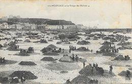 Ostréiculture: Cancale, Le Triage Des Huîtres - Carte HLM N° 119 Non Circulée - Fishing