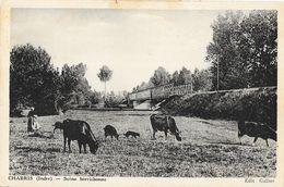 Chabris (Indre) - Scène Berrichonne: Vaches Au Pâturage Près De La Voie Ferrée - Edition Gallier, Carte Non Circulée - Andere Gemeenten