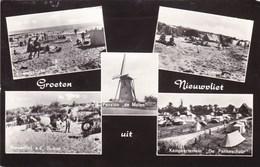 Groeten Uit Nieuwvliet  (pk45795) - Andere