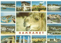 HAMMAMET TUNEZ TUNISIE - Túnez