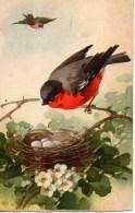 Illustrateur KLEIN  Oiseau Sur Son Nids - Klein, Catharina