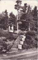 CSM  - 111. LA LOUVESC - Paysage Et Bois Du Mont Besset, En Bordure De La Route De Tournon - La Louvesc