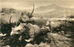 RHINOCEROS - Rhinocéros
