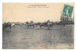 (19758-14) Elevage Normand - Chevaux Au Pâturage - Non Classés