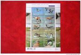 SHEET Fauna Birds Vogels Oiseaux Pajaros 2016 POSTFRIS MNH ** NEDERLAND / NIEDERLANDE / NETHERLANDS - 2013-... (Willem-Alexander)