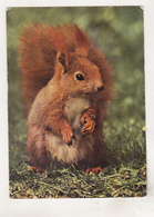 Germany Old Used Postcard - Animals - Squirrel - Stieren