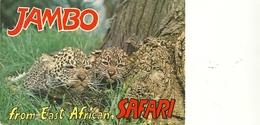 KENIA---  EAST  AFRICAN  WILDLIFE   LEOPARD   CUBS  1974 - Kenia