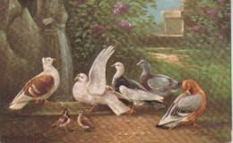 (AN179) OISEQAUX - Pájaros