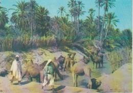 (TU142) SUD TUNISIEN . OASIS - Túnez