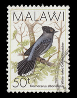 Malawi Scott #528, 50t Multicolored (1988) White-tailed Crested Fly-catcher, Used - Malawi (1964-...)