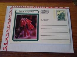 144274 CARTOLINA POSTALE  RSA POSKAART POSTCARD   ERICA STRIGILIFOLIA - Sud Africa