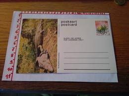 144283 CARTOLINA POSTALE  POSTCARD POSKAART SWA KROKODILLE CROCODILES - Sud Africa